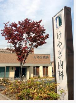 2012けやき紅葉.jpg