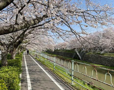 香流川2021春.jpg